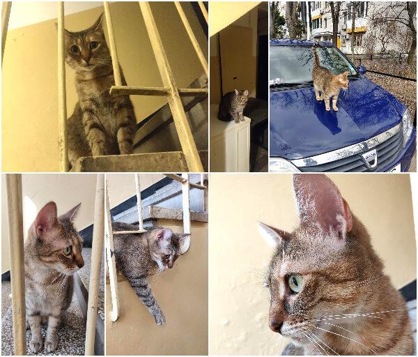 pisicuța scării
